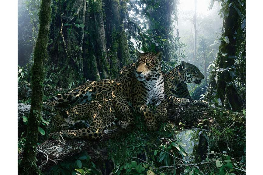Simen Johan – From the series Until the Kingdom Comes, Untitled #183, 2015 - Image  © Simen Johan