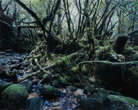 Thomas Struth-Paradise 14 (Yakushima, Japan)-1999
