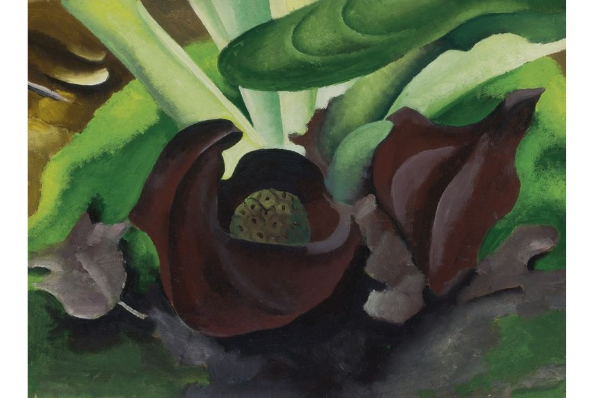 Untitled (Skunk Cabbage), 1927