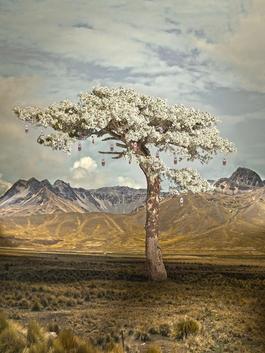 Wishing tree 1 (Soma)