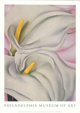 Two Cala Lilies on Pink
