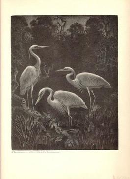 White Herons at Home