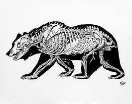 Anatomy of a Bear