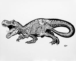 Anatomy Of A Tyrannosaurus Rex
