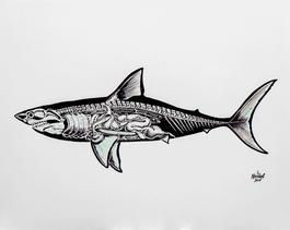 Anatomy of a Shark