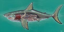 Translucent Great White Shark