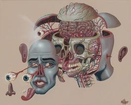 Dissection of a Head