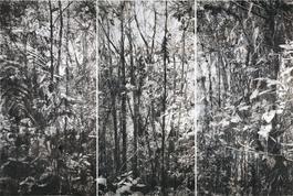 Bosques Lanzas Galaica