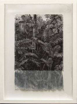 Selva Antigua
