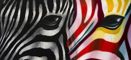 Zebra Farandole