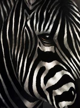 Zebra Le Poete