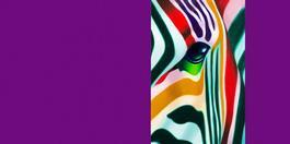 Zebra Ouverture