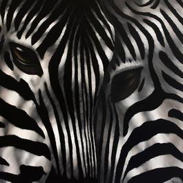 Zebra Rencontre