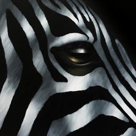 Zebra Sprinter