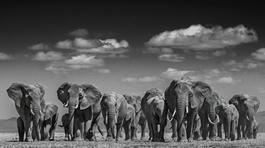 Elephant Uprising