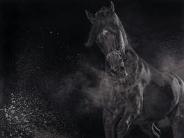 Snorting Stallion
