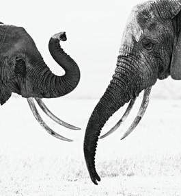 Ivory Exchange