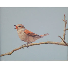 Bird series(3)