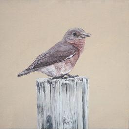 Bird series (1)