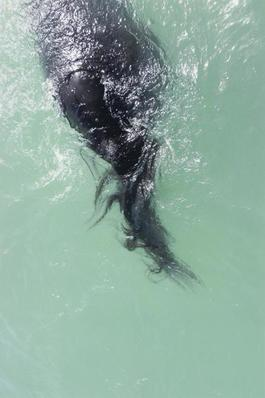 #40 Untitled (Swimming) from HORSE 2007-2014