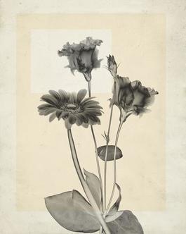 flower.s.22