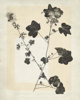 flower.s.15