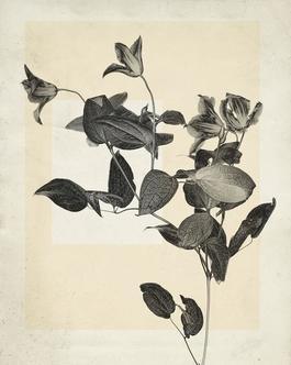 flower.s.02