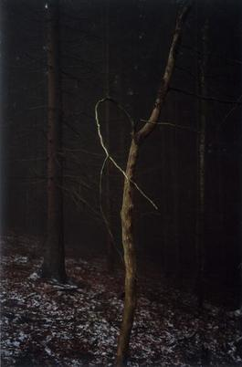 #4 Untitled (Dead Tree Dancing) from FOREST 2000-2005