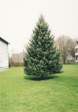 Untitled (Christmas Tree)