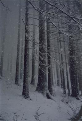 Untitled (Forest 02, Snow Storm)