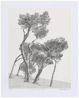 Pine Trees, De Waal Drive