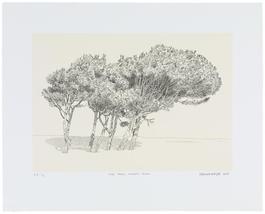 Pine Trees, Simon