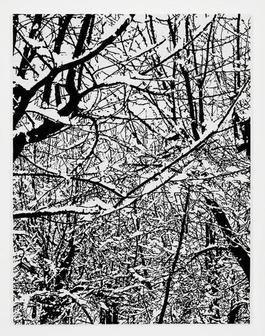 SNOW FOREST 002A