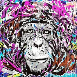 Print Splash Magic Monkey