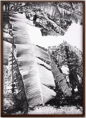 oda escritura comienza en una selva II / All Writing Begins in a Jungle II