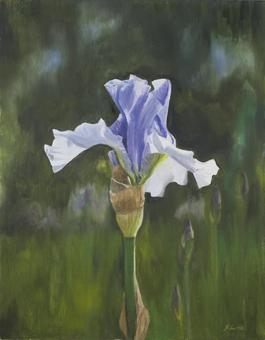 Spetchley Blue Iris