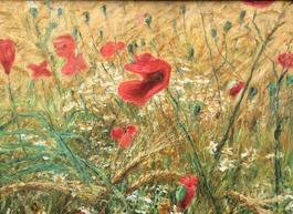 Poppy Field Near Abergavenny Wales