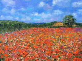 Poppy Field Near Usk Wales