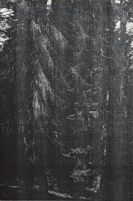 Wald (Briol III)