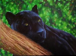 Meow II