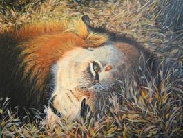 Meow III