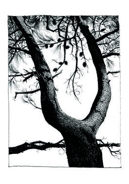 Pine 12