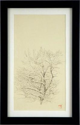 Tree Study, Dogwood