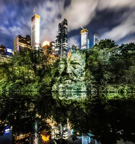The Face of Trees (New York)