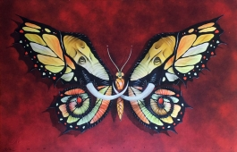 Elephutterfly Edition 50