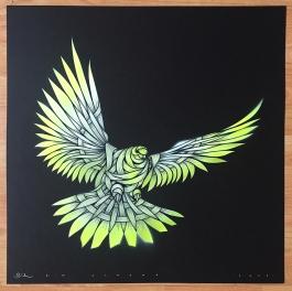 Dove Black YW