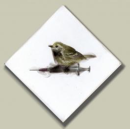 Small bird on Seringe