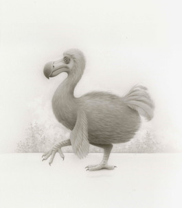 Curious Dodo Bird