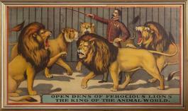 Open Dens of Ferocious Lions, the King of the Animal World