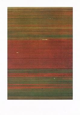 Tulpenfelder / Tulipfields
